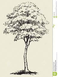 big tree vector sketch stock vector image of flora engraving