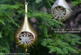make an inexpensive hanging air plant terrarium from a holiday