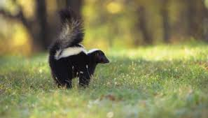 New York Wildlife images A list of animals native to new york sciencing jpg