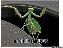 Mantis Meme - fabulous mantis by retsam meme center