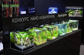 idee deco aquarium eclairage nano aquarium best ideas about nano aquarium on taking