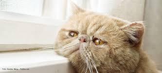 gerüche die katzen nicht mö was die miez so gar nicht mag tierische tipps