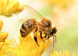 how to save the bees bee safety tips