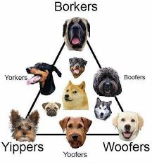 Know Your Meme Dog - know your meme know your doggos http bit ly 2ow3dku facebook