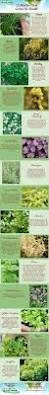 Herb Grower S Cheat Sheet 561 Best Growing Herbs Images On Pinterest Gardening Herbs