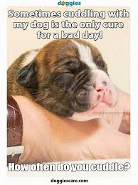 boxer dog sayings 1655 best dog stuff images on pinterest dog stuff stuffing and
