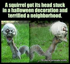 Funny Meme Animals - funny animal pictures of the day 21 pics shining world funny