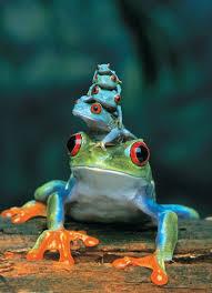 eyed tree frog jigsaw puzzle puzzlewarehouse com