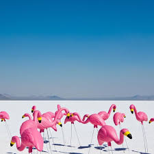 best 25 pink flamingos lawn ornaments ideas on papier