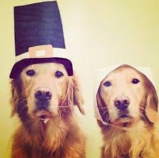 30 dogs ready to celebrate thanksgiving with you dogtime