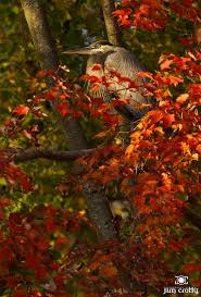 82 fall hocking hills images ohio