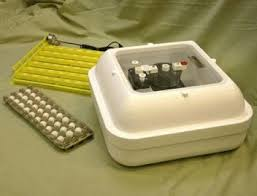 Used Cabinet Incubator For Sale Gqf Egg Incubators For Sale Gqf Cabinet Incubators For Sale