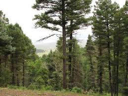 lexus fosse park lot 66 taos pines ranch road angel fire property listing mls