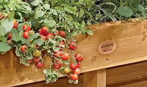 18 decoration of vegetable garden ideas excellent innovative