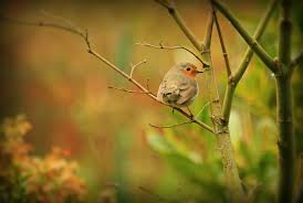 selective focus photography of grey bird in tree branch free