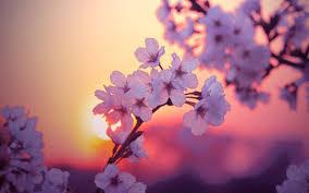 blooming flowers spectacular timelapse of hundreds of blooming flowers soren dreier