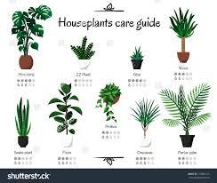 Tropical Plants Pests Common House Plant Pests Indoor Plants Houseplant Flies Images