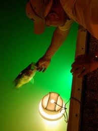 crappie lights for night fishing a guide to choosing a fishing light attractor fish fishing hook