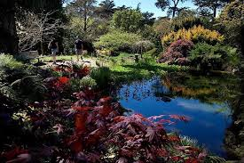 Botanical Garden Golden Gate Park Inner Sunset San Francisco Real Estate