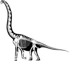 dinosaur bones coloring page with skeleton coloring page