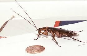 diy 5 natural insect traps deterrents pests