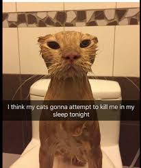 Dog Cat Meme - cats will attempt to kill at night cat dog cat relationship