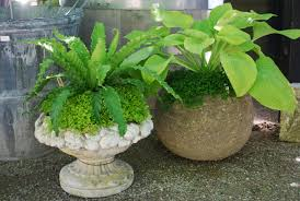 Outdoor Potted Plants Full Sun by Summer Containers Dirt Simple