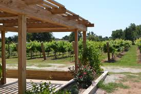 waddell vineyards chickasaw country