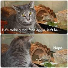 Huehuehue Meme - huehuehue lizard mocks the easily annoyed cat