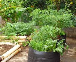 vegetable planting guide how to start growing your own food