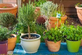 fertilizing container gardens a beginner u0027s guide the grow