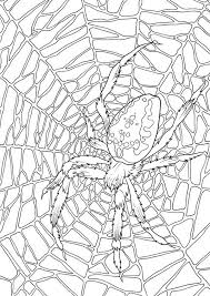 Very Large Spider Web Coloring Page Color Luna Spider Web Coloring Page