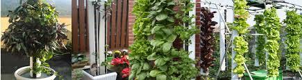 thdc hydroponics