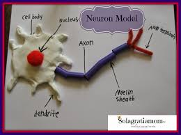 neuron model and nervous system experiments for cc cycle 3 week 4