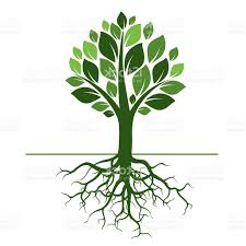 best free green tree and roots vector illustration pictures