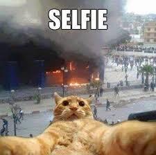 Gato Meme - gato selfie meme by juanlu 02 memedroid
