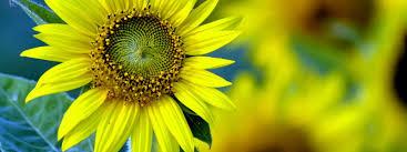 importance of flowers in human life flower power flower blog