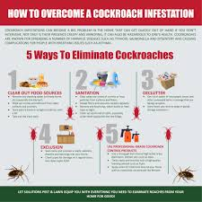 infographic how to overcome a roach infestation solutions pest