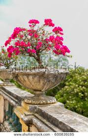 Banisters Flowers Banister Stock Images Royalty Free Images U0026 Vectors Shutterstock