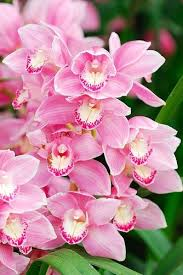 954 best flowers images on pinterest flowers backyard ideas and