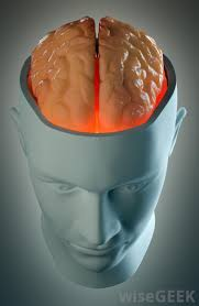 Which Part Of The Brain Consists Of Two Hemispheres What Are The Cerebellar Hemispheres With Pictures