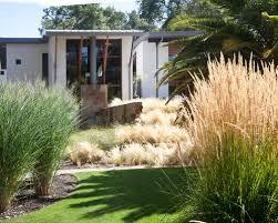 ornamental grass houzz
