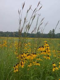 native plants of kansas family roots clark jones corbin and mccauley love those flint