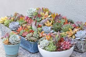 succulent collection i dream of succuentsi dream of succuents