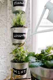 Indoor Vegetable Container Gardening - watering my indoor mint plant from my indoor vegetable garden