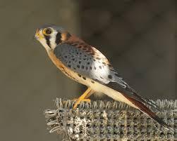 South Carolina birds images The center for birds of prey awendaw south carolina into the jpg