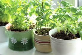 Small Herb Garden Ideas Container Herb Garden Ideas Pot Small Herb Garden Ideas Herb Pot