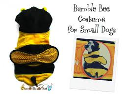 bumble bee halloween costume for small dogs cats pets bumble dog