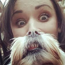 Cat Beard Meme - dog beards a canine equivalent of the photo meme cat beards