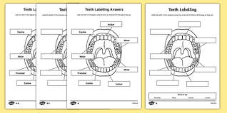 labelling worksheet teeth ourselves my body labels